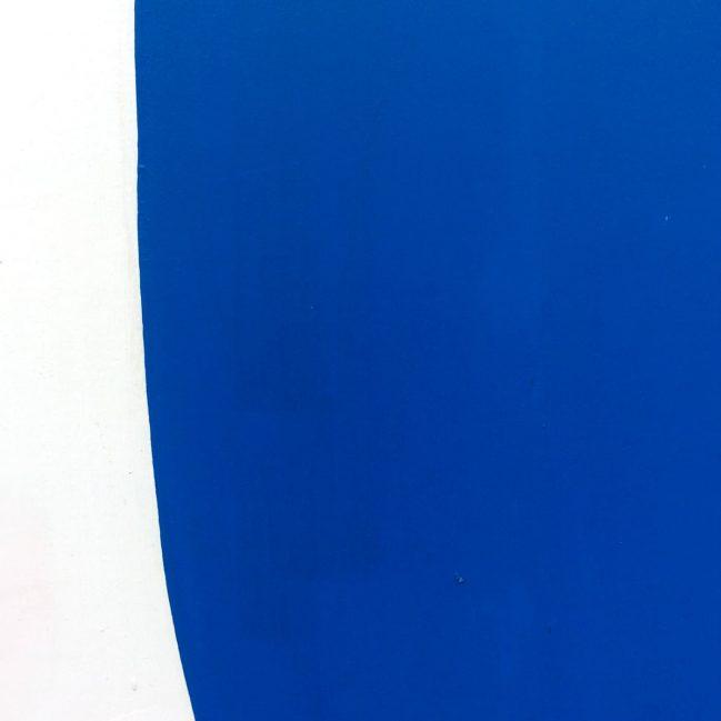 Giant Blue Cypress 2