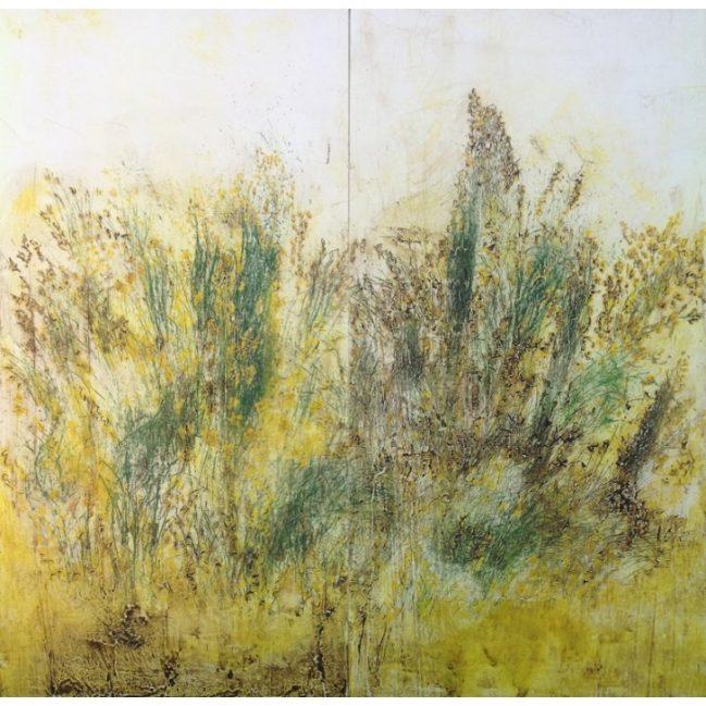 Meadow Broom 1