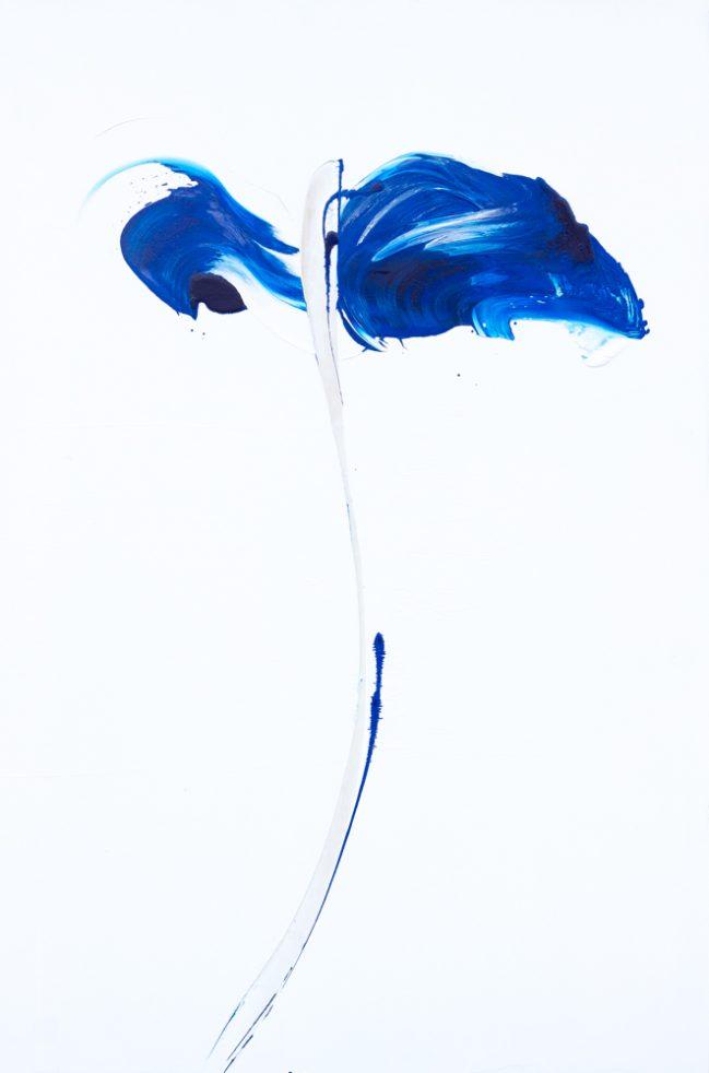 Papavero Blu 1