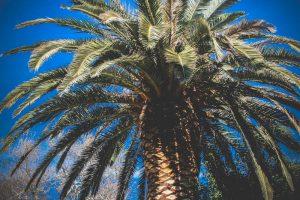 california photo w-366 3