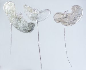 silver leaf poppies, contemporary art in florence, art galley