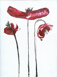Velvet red poppies