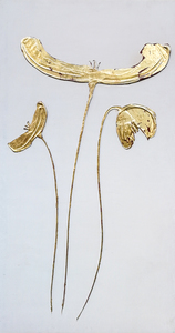 Papaveri oro
