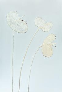 silver leaf poppies 2021